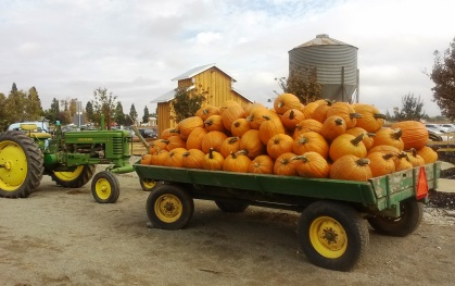 Bishop's Pumpkin Farm, Wheatland, CA (Photo by Cindy Fazzi, October 2016)